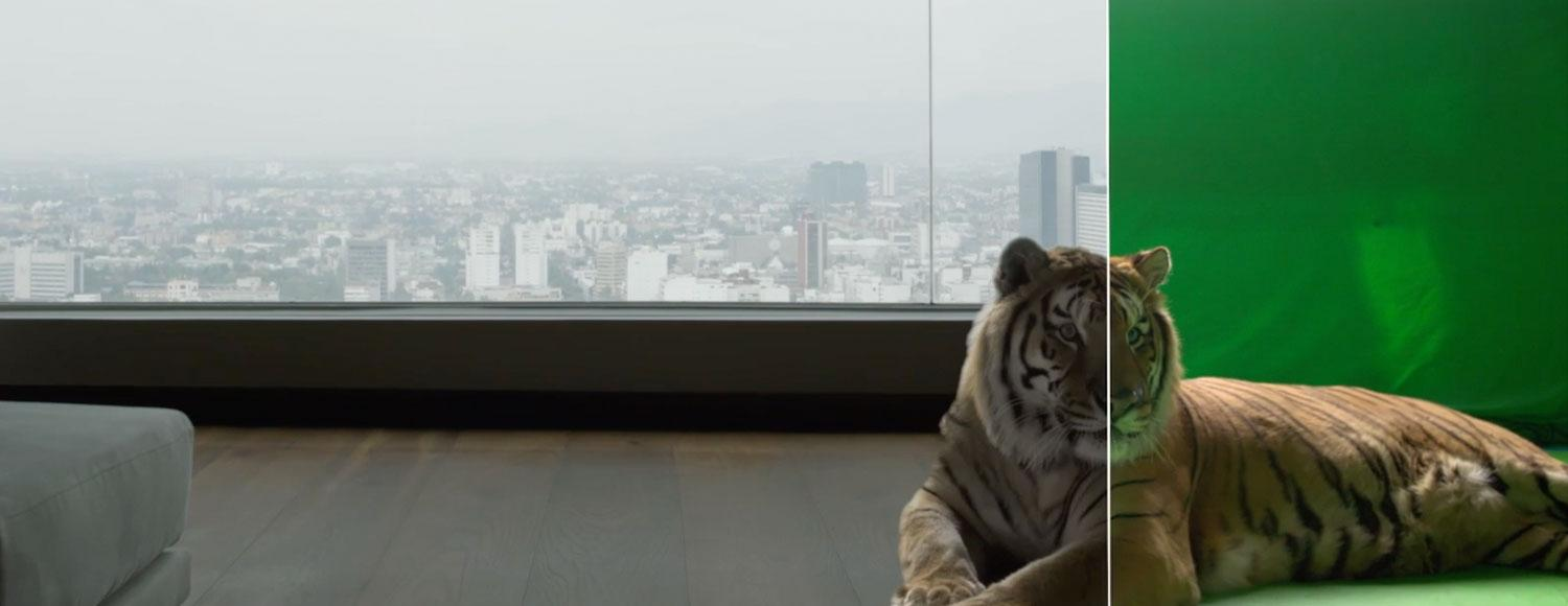 A real tiger on the set of the IMAX short film,  Infinite Worlds.